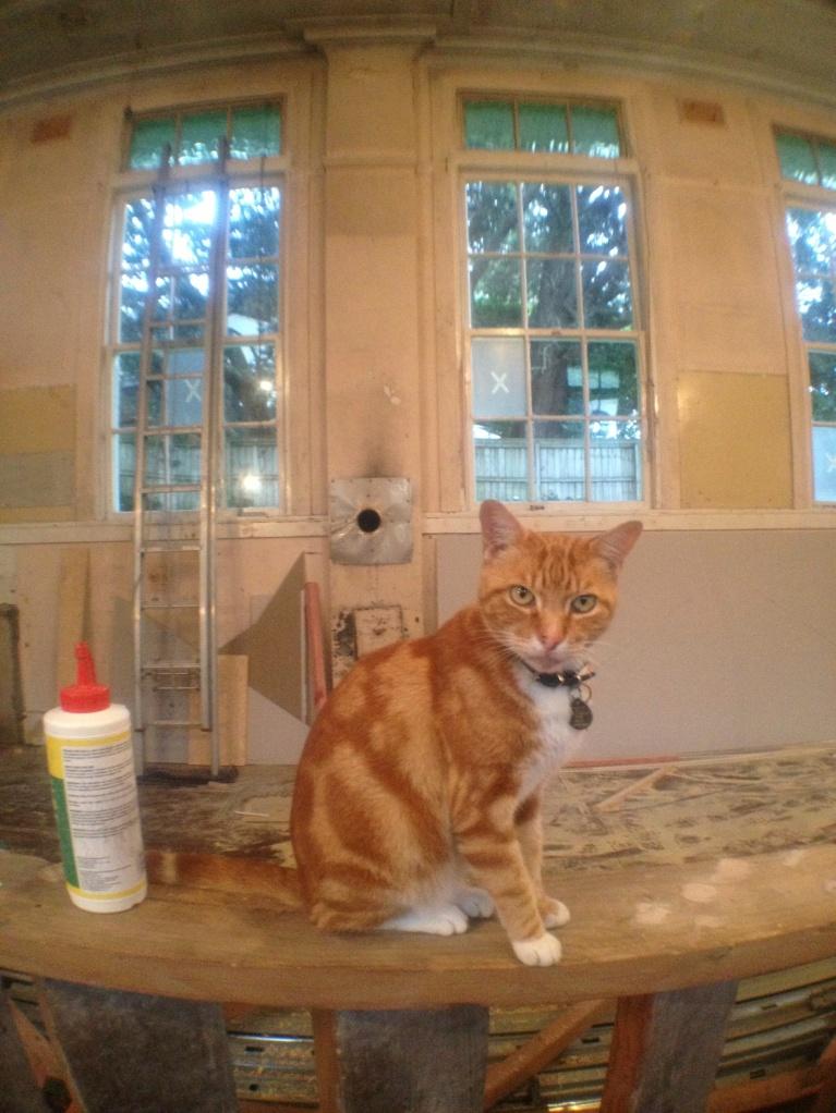 Vespa the Builders Cat!